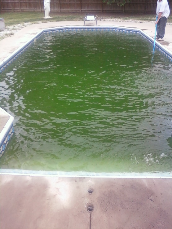 Image result for vinyl pool with algae images